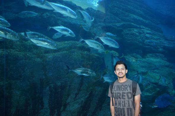 dubai aquarium in dubai mall